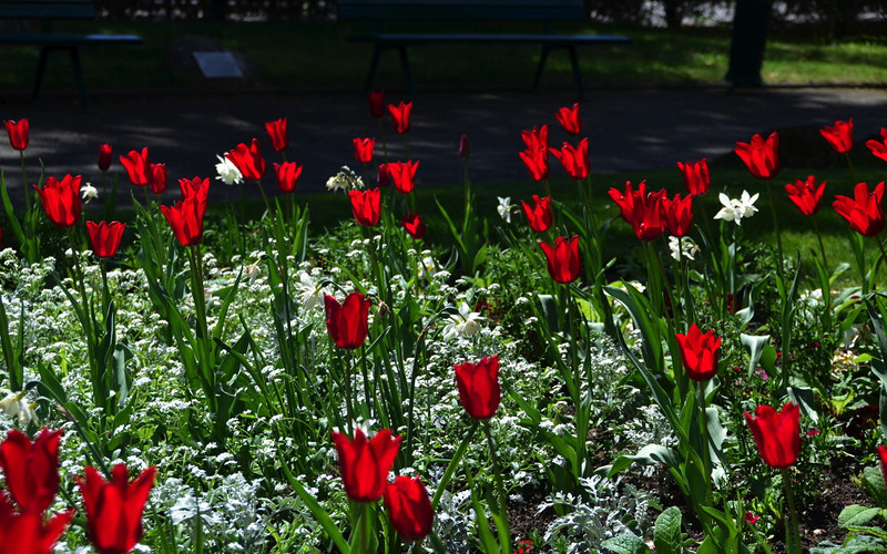 Tulips in the Garden of Poets