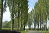 Classic poplar-lined road in Normandy