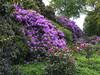 Jardin des Plantes: Rhododendrons