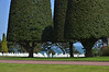 Heavily shaped trees, crosses in American Cemetery in Colleville-sur-Mer