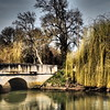 The Willow and the Bridge