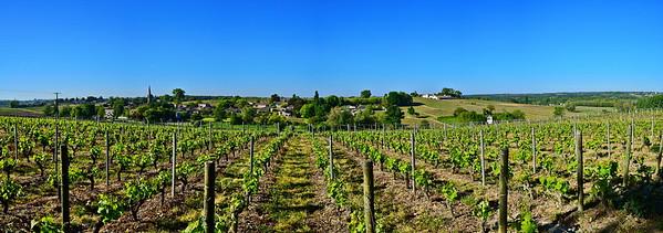 Vineyards in the Libourne Region
