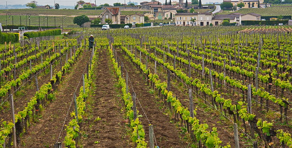 04252017_Saint-Emilion_Vineyards_750_2611