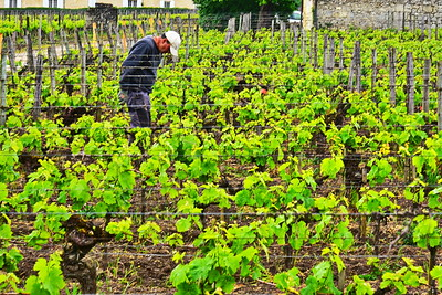 04252017_Saint-Emilion_vineyard_worker_750_2613