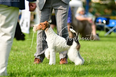 Terrier (France Godbout)
