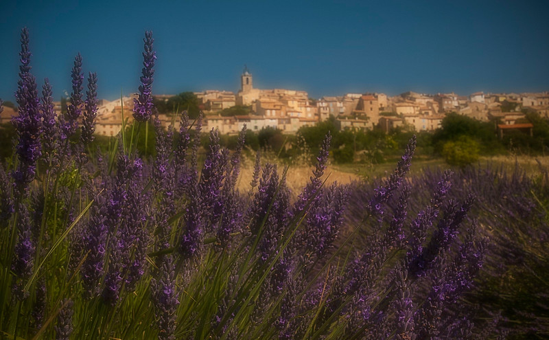 Old town and lavender field; Provence; France