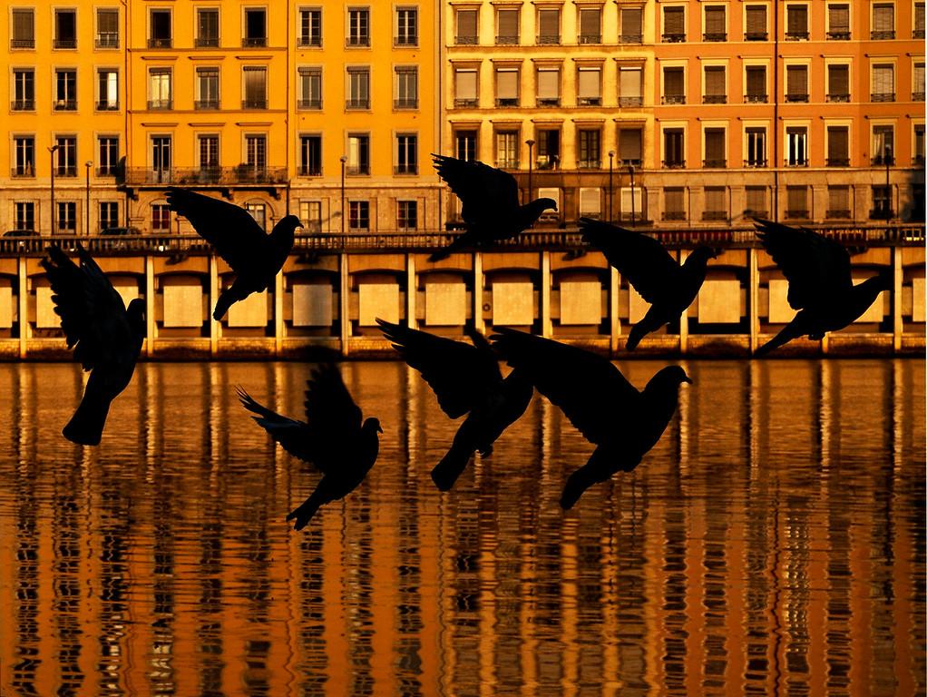 Doves; Lyon; France