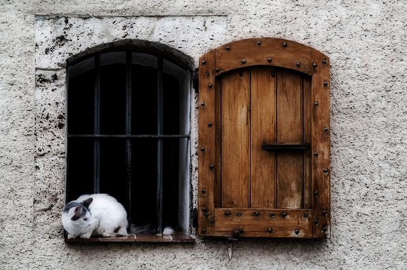 Cat in Window; France