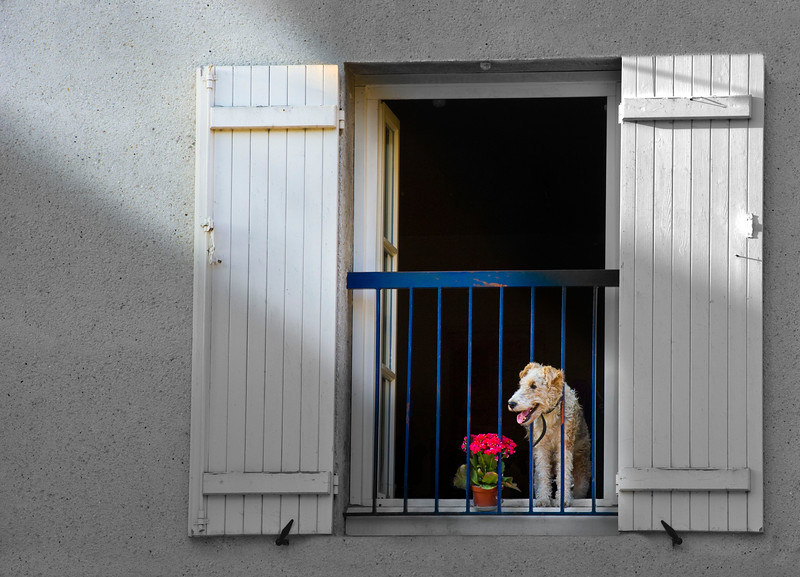 Dog in Window; France