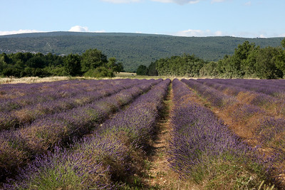 Provence June 27, 2009