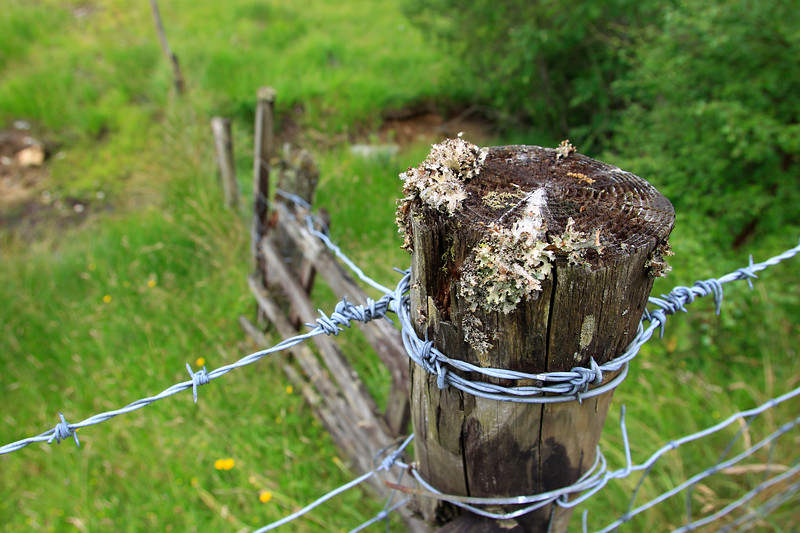 Barbed Wire and Fence Post, Scotland