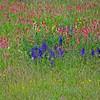Wildflowers.aussois