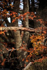 Bois d'automne