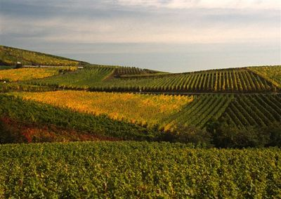 Autumnal vineyards near Turckheim
