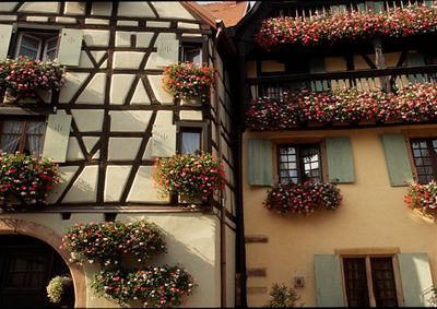 Flower bedecked houses, Eguisheim