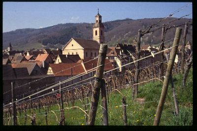 "Riquewihr ""skyline"" from the vineyards"
