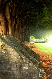 Row of trees, Abbaye de Noirlac, Berry (1)