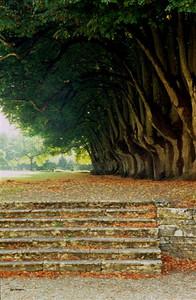 Row of trees, Abbaye de Noirlac, Berry (3)