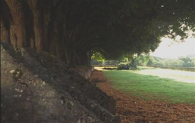 Row of trees, Abbaye de Noirlac, Berry (2)