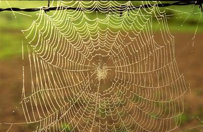Dew on cobweb near Abbaye de Noirlac