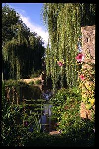 Weeping Willow, Samur-en-Axois, Burgundy