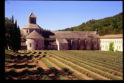 Abbey de Senanque after lavender harvest