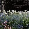 Flowers at Parc Monceau