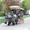 Horse drawn carriage for tourists