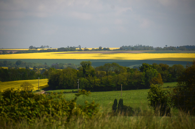 Beautiful fields near the highway