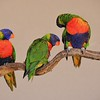 Parc des Oiseaux - Lori arc-en-ciel (Australie)
