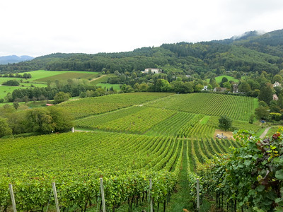Vineyards near Staufen, Germany in the Black Forest region.