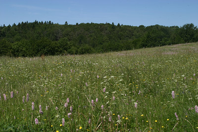 Meadow, atop Le Ballon d'Alsace
