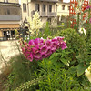 Amboise_2012 06_4494044