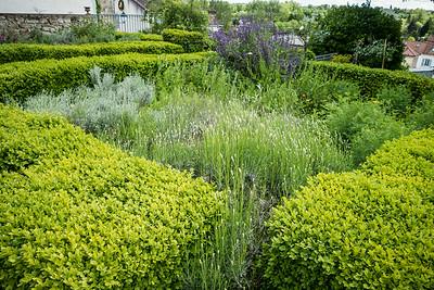 Dr. Gachet's medicinal garden