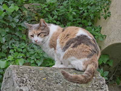 hotel ousteau de baumanière cats