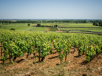 Vineyard Route South of Beaunne