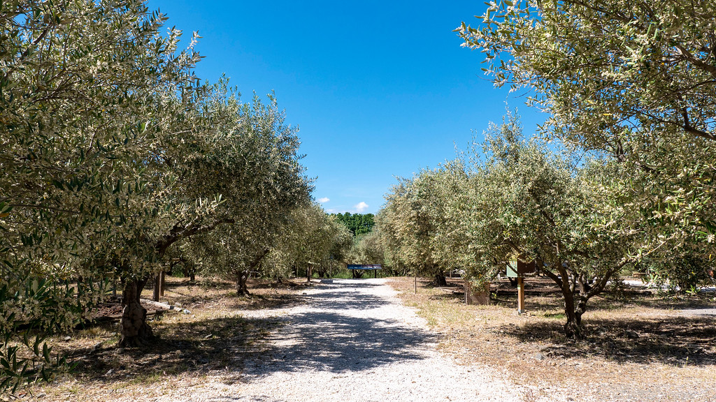 French Olive Oil Tour