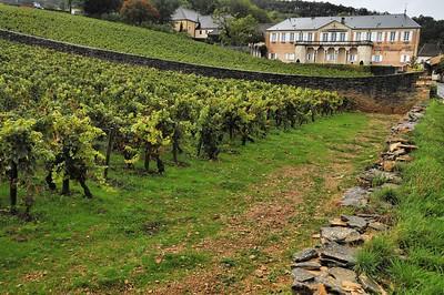 Vignoble à Volnay