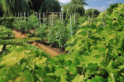 Jardins du manoir d'Eyrignac - Jardin Potager