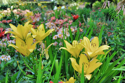Jardins du manoir d'Eyrignac - Jardin Fleuriste