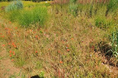 Jardins du manoir d'Eyrignac - Les 4 Carrés - Jardin des Filles du vent