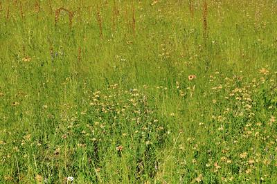 Jardins du manoir d'Eyrignac - Les 4 Carrés - Prés Fleuris
