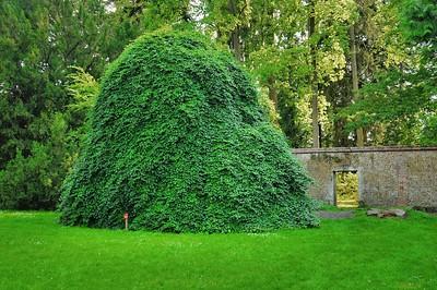 Arborétum du château d'Harcourt - Hêtres tortillards (Europe occidentale)