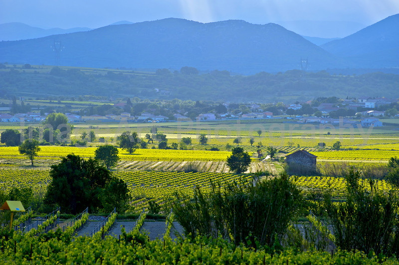 Summer in the Languedoc