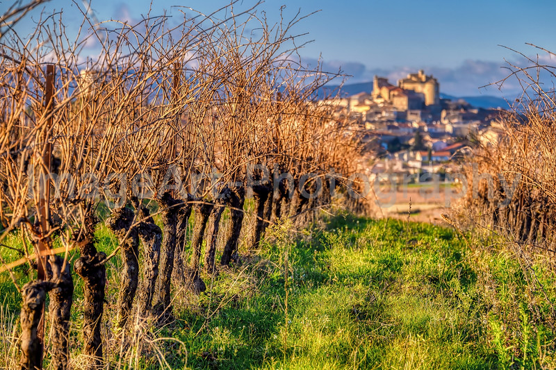 Vineyards near the village of Puissalicon, Herault, France