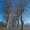 Plane Trees line this road in rural France