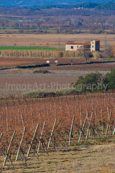 Farmhouse surrounded by vines in winter