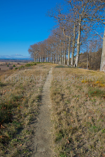 Footpath through the fields of Languedoc