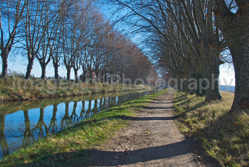Tree lined canal in France