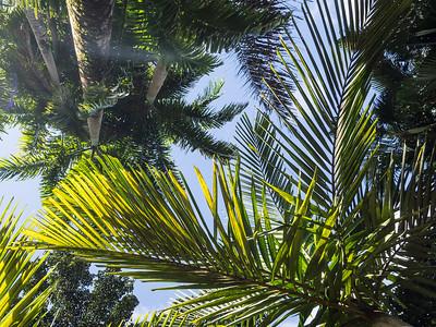 Jardin de Balata botanical garden